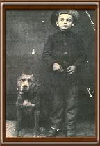 cane corso louisiana , cane corso for sale